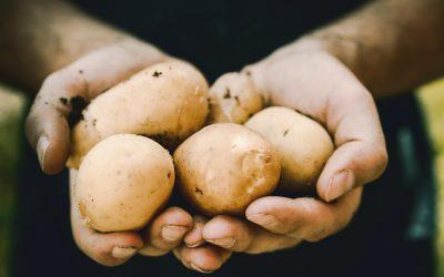 Dalle patate il PACKAGING sostenibile e personalizzato